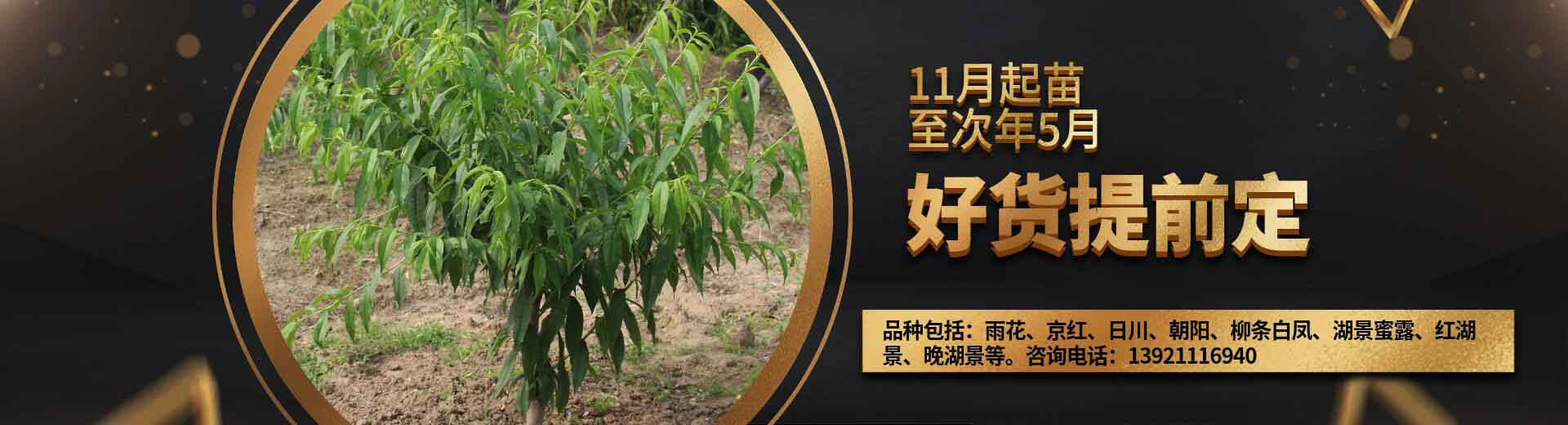 阳山水蜜桃树苗